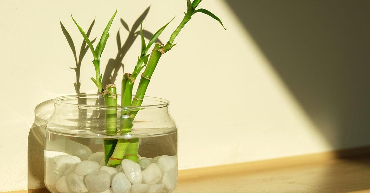 Опыт цветовода: как сделать, чтобы черенки прижились