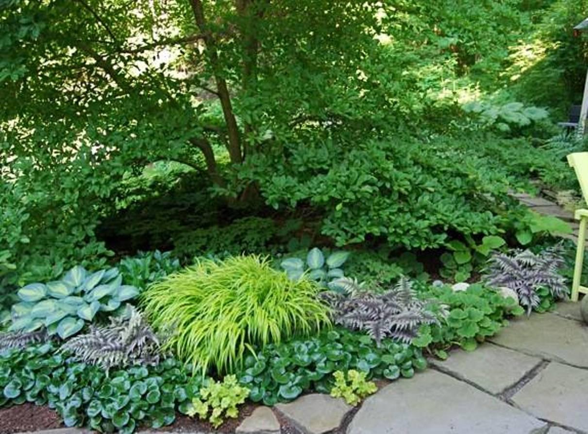 Ландшафтный дизайн растения для тени